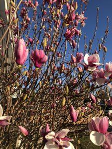 winter transition magnolia